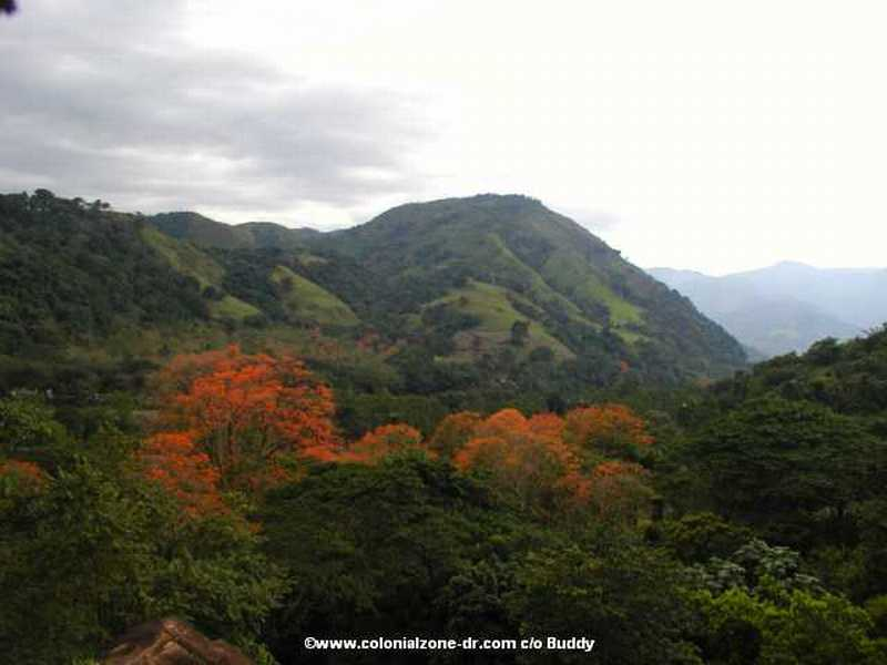La Vega mountains and flamboyan tree