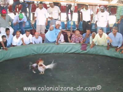 cock fighting ring in dominican republic