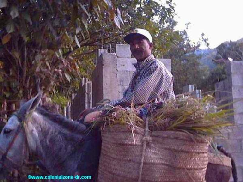cpffee farmer returning home after a hard days work