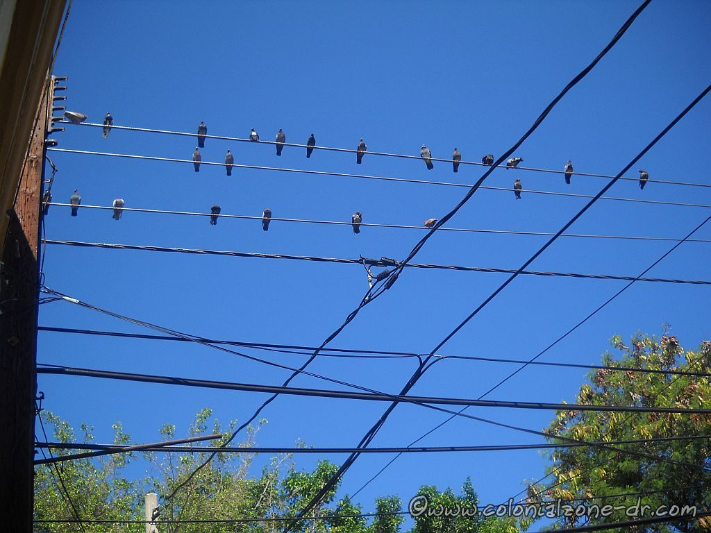 pigeons on the wires