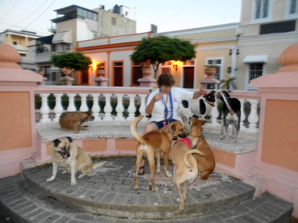 Some of the dogs of the Colonial Zone, my dogs and their friends playing with me. I love these dogs!