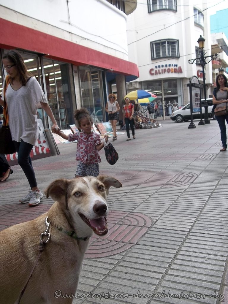 Buenagente, the famous dog, is taking a stroll down Calle el Conde