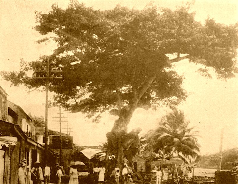 Ceiba de Colon in 1905