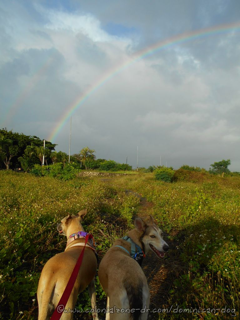 Dogs Enjoying A Rainbow After The Storm