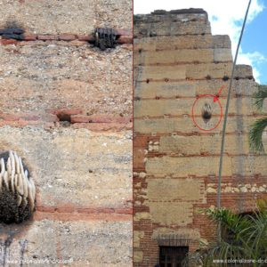 An amazing bee hive on the side of the Ruinas San Nicolas de Bari in the Colonial Zone