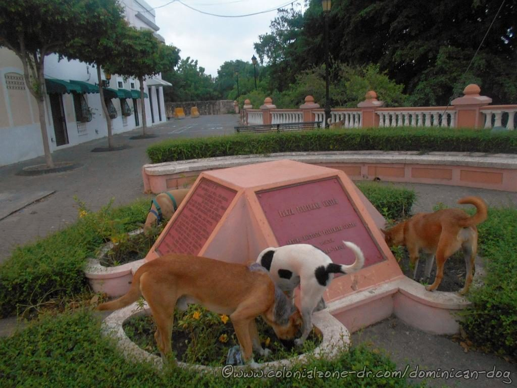 The local dogs visiting the place where the bust of Pellerano Castro once stood in the park that is his namesake.