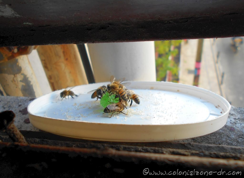 The bees say buzzz in English and Spanish.
