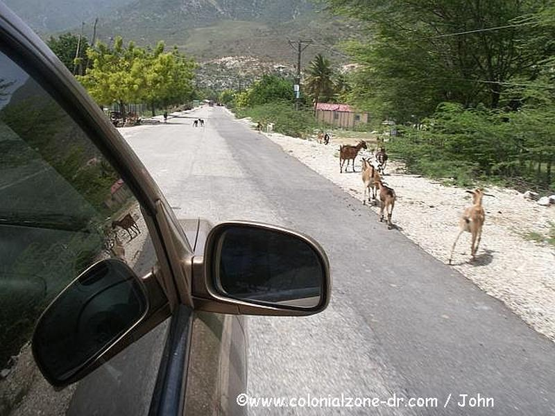 Goats taking a stroll down the street near Lago Enriquillo.
