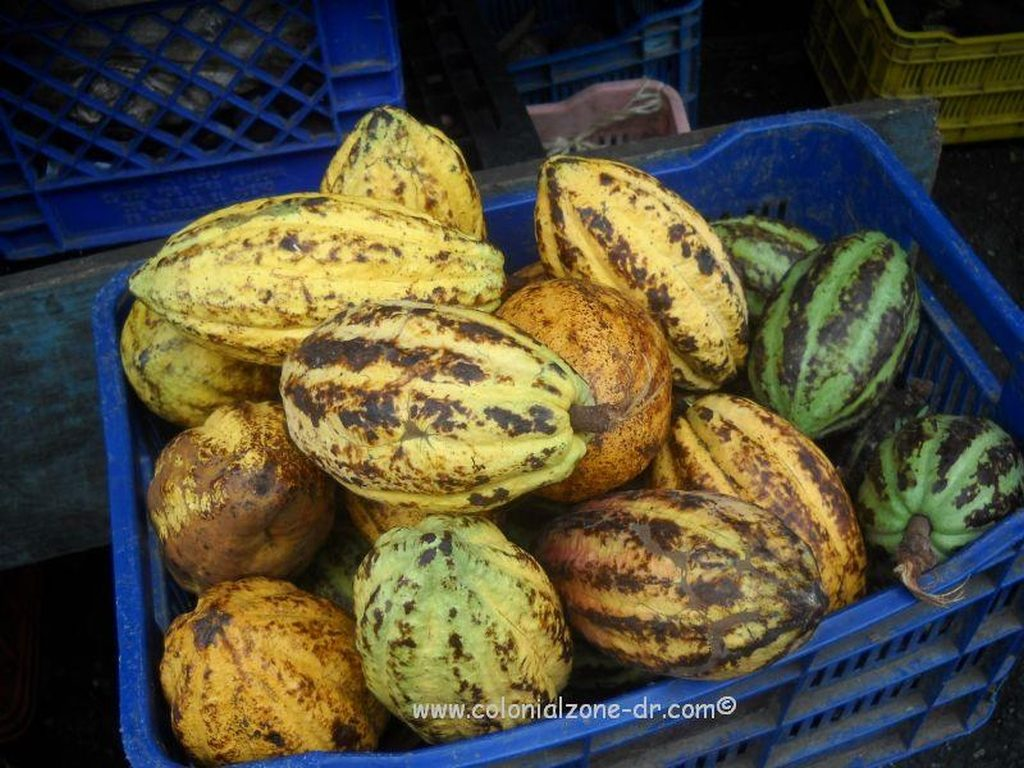 A basket of ripe Dominican cacao in the market