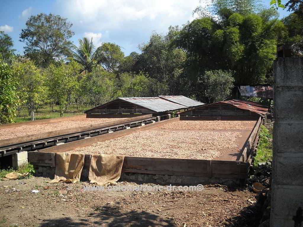 Cacao beans being dried.