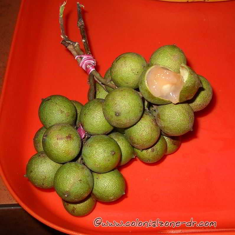 A bundle of Limoncillo fruit ready to eat.