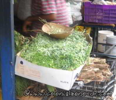 Moringa leaves in the market