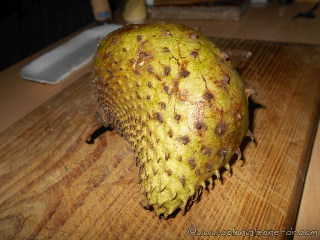 The ripe guanabana - sour sop is a brown, yellow, green color and soft to the touch.