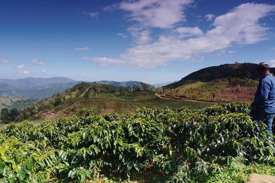 Coffee is grown in the cooler mountainous regions of Dominican Republic.