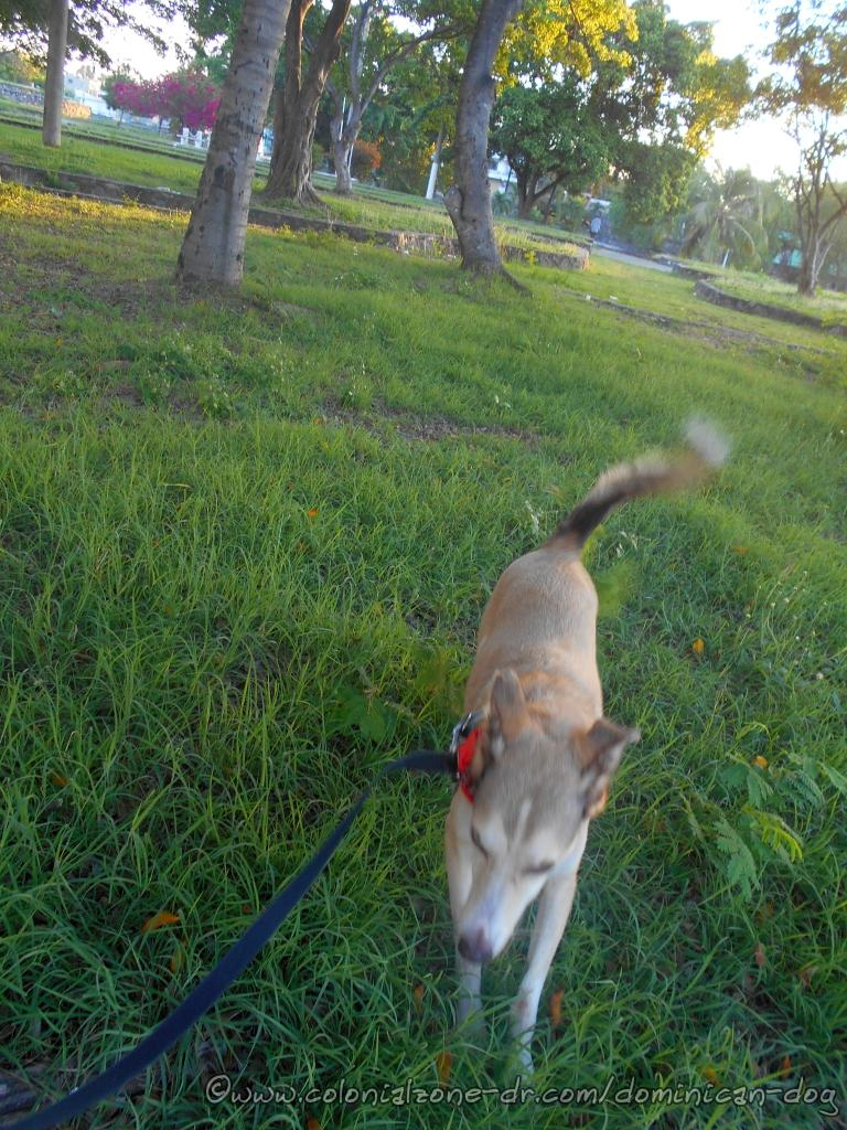 Buenagente is enjoying the cool refreshing grass and shade areas of Parque Monumente de la Caña.