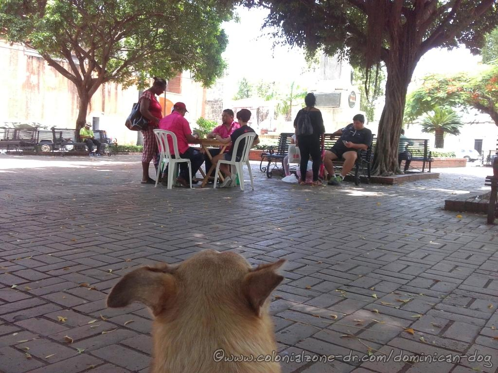 Wednesday afternoon in Parque Duarte, Colonial Zone the neighbors are relaxing with a friendly game of dominoes as Buenagente, The Dominican Dog Blog dog, looks on.
