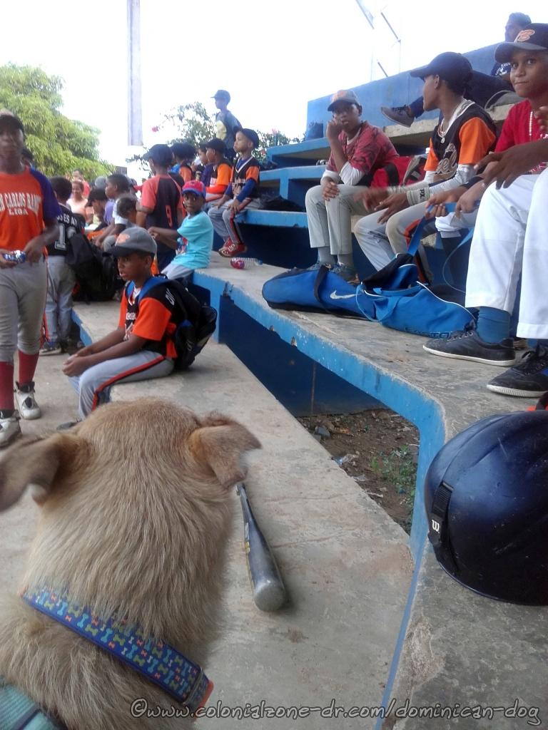 Buenagente, The Dominican Dog, is watching the kids waiting to Pley Bol! at the Pley La Marina (Marine Baseball Field) in Mameyes, Santo Domingo Este.