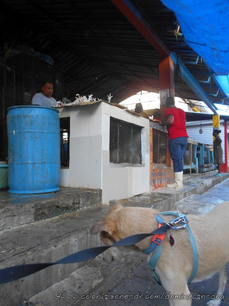 The chicken and meat vendors outside of Mercado Modelo